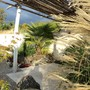 New terrace (only 4 people max) (Trachycarpus fortunei (Chusan palm))