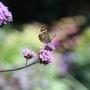 Butterfly 30 July 08