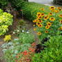 Front flower bed (Rudbeckia Hirta Hybrid)