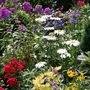 Perennials_30_july_08