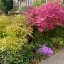 Front_garden_october_21st