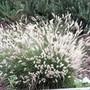 Super white Grass..