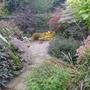 Foliage_garden_28th_october