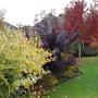 Autumn colour in the border