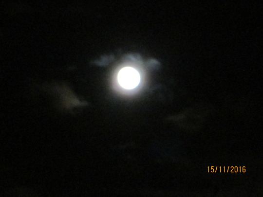 Super Moon taken from the garden 4.30ish am