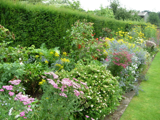 A Border of Perennials