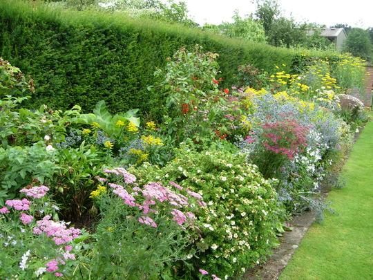A Border of Perennials