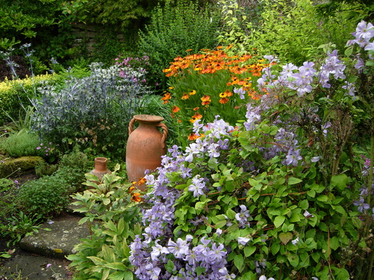 Clematis and Heleniums by a nice pot.