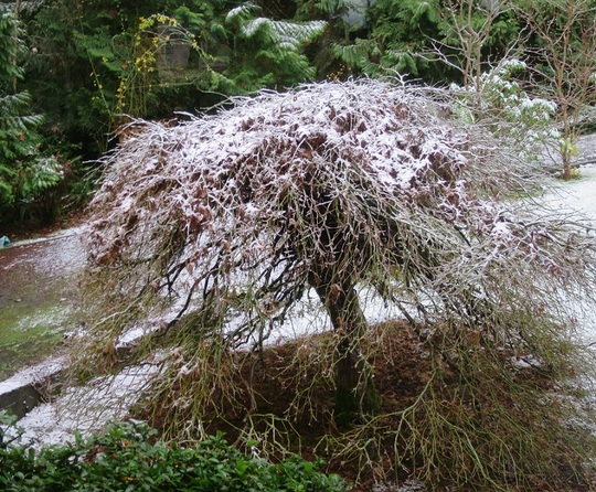 Snow on December 5th.