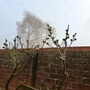 Fog_and_figs_.1