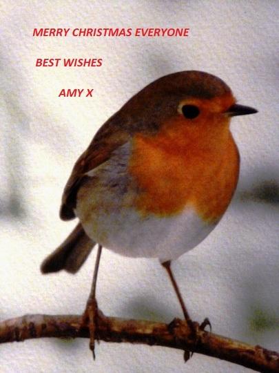 Happy Christmas Everyone ...