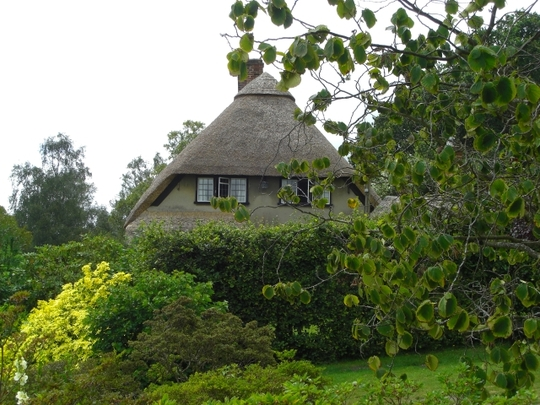 Thatched cottage Furzey Gardens