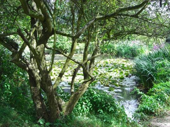 Furzey_Gardens_Woodland.jpg
