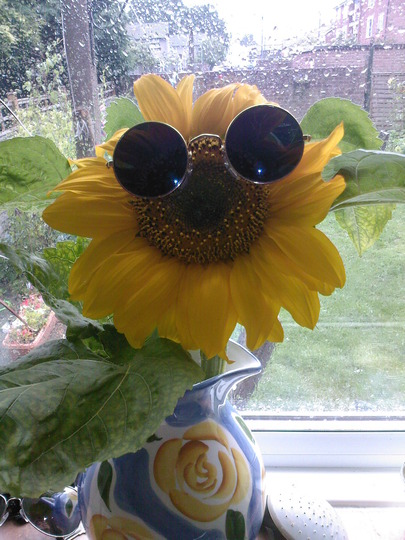 One cold Sunflower
