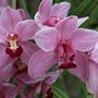 Kew Orchid festival 2017