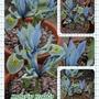 Collage_katharine_h_iris...