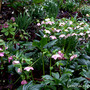 A view of one section of the garden yesterday