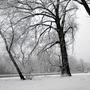 In my Snowy World