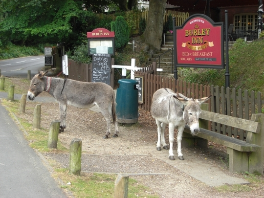 Scenes from Burley, New Forest