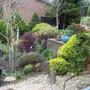 Selection of shrubs.