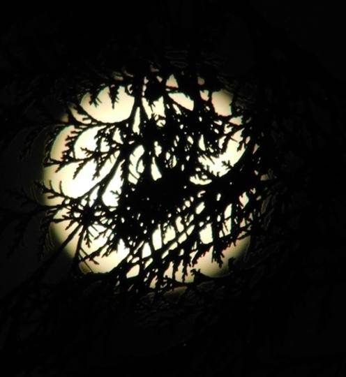 Moon in a basket