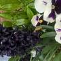Hyacinth Back Mystic