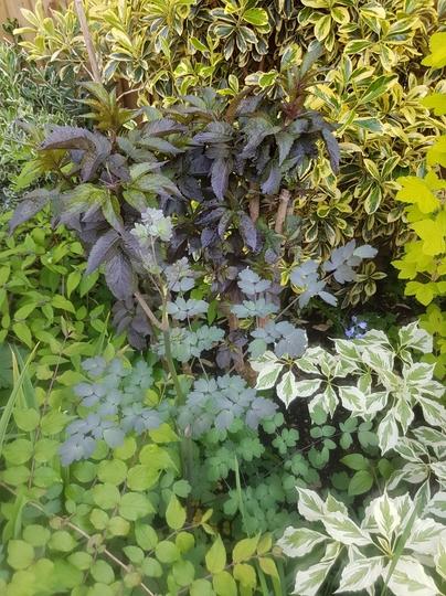 Foliage!! who needs flowers?