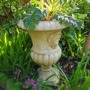 Urn planted up with Acanthus Whitewater..... (Acanthus mollis White water.)