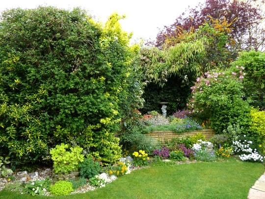 My back garden April 2017