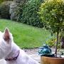 Tilly's Garden!