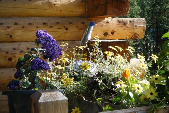 Morning Porch