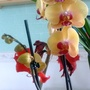 Yellow Orchid (orchid)