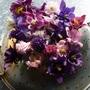 Aquilegias in bloom today