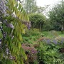The garden after the rain.
