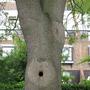 Looks like a ......... (a tree.)