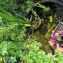 Tadpoles loving the barrel pond