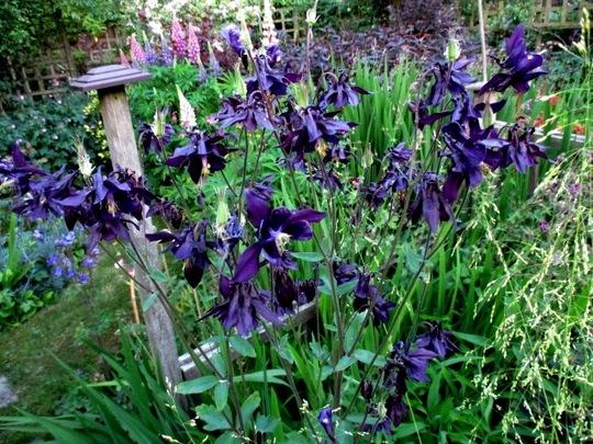 Very dark purple, nearly black