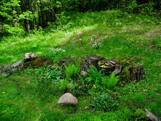 the woodland stump garden