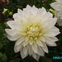 Garden_flowers_003