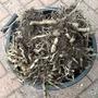 Aggressive roots..