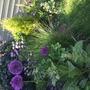 Corner of my garden