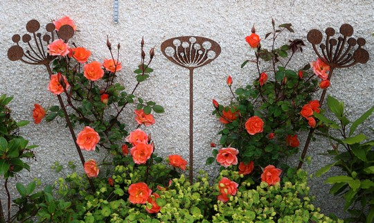 Rose 'Warm Welcome' and Rusty Sculpture Spikes