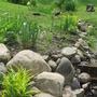 Tradescantia, siberian iris, hemerocallis