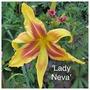 I'm in love with LADY NEVA (Hemerocallis)
