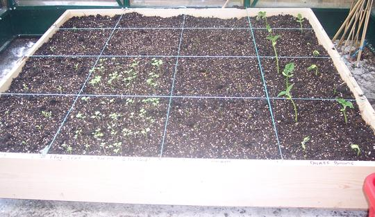 My Square Foot Garden