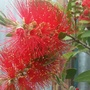 Standard Bottle Brush