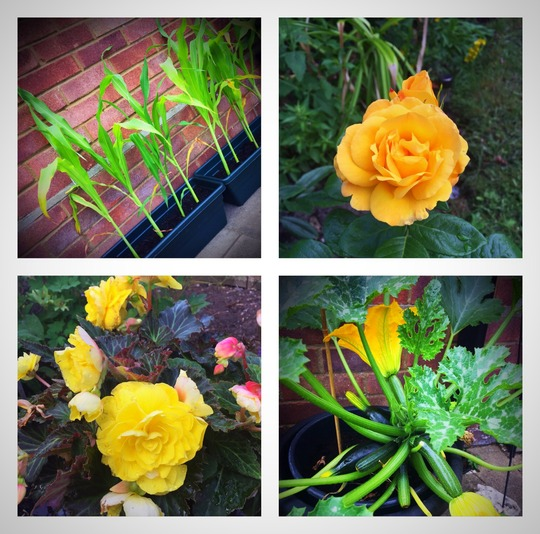 Awash with green and yellow !