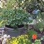 image Trifolium.