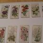Old_cigetette_cards