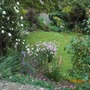 View down my steep sloped garden.